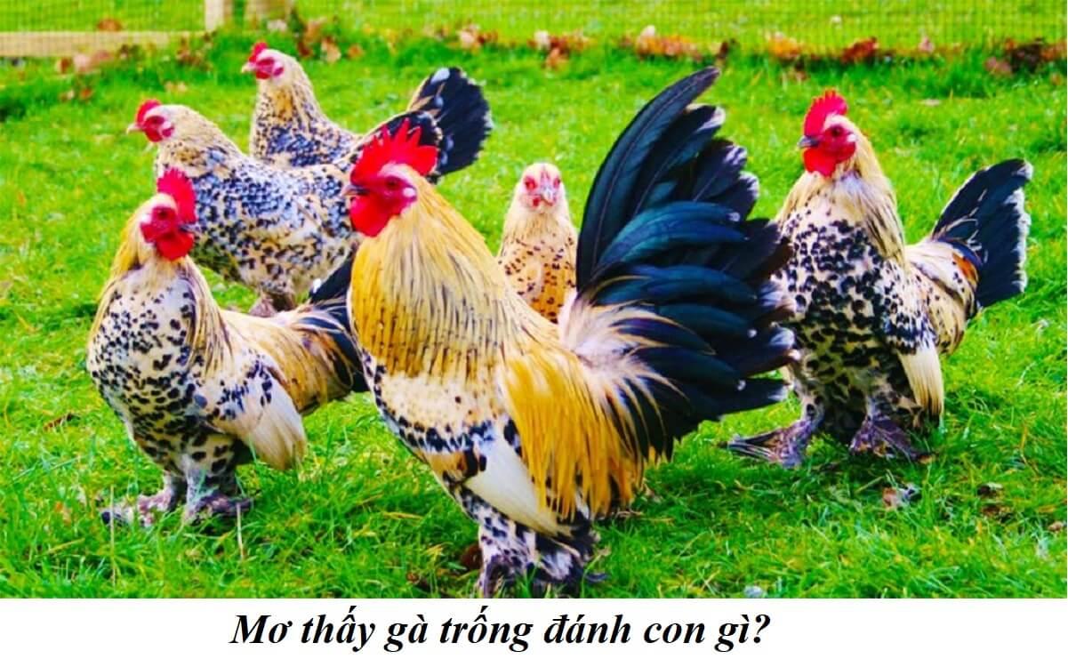 Mơ thấy gà trống đánh con gì để trúng lớn?